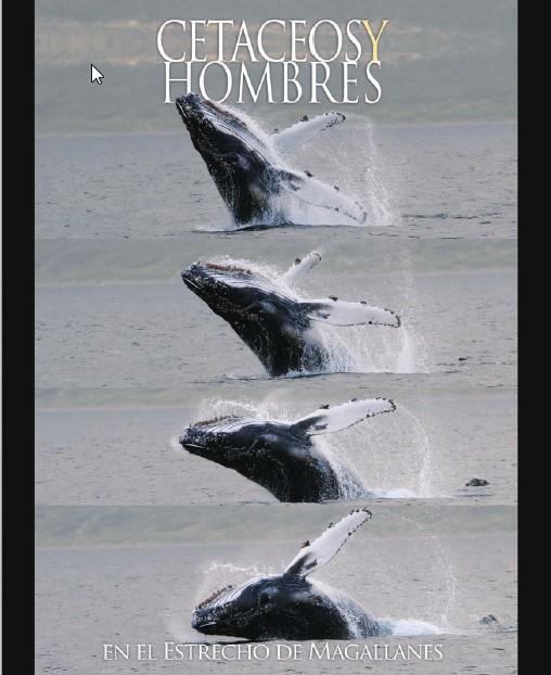 Cetáceos y el hombre